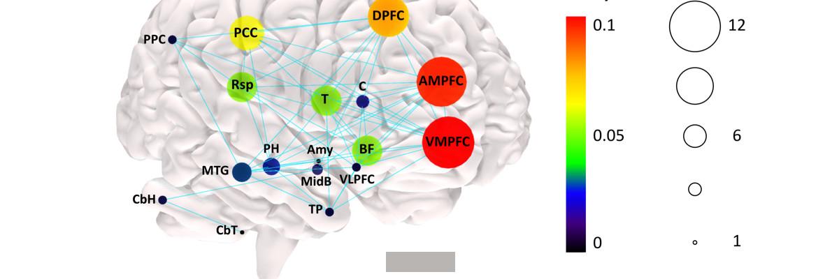 Permalien vers:Un nouveau modèle anatomique du « mode par défaut » du cerveau